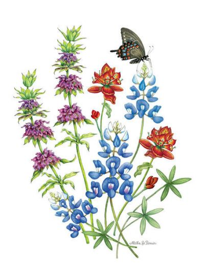 Aletha St. Romain Bouquet of Bluebonnets, Horsemint and Indian Paintbrush with Swallowtail Butterfly