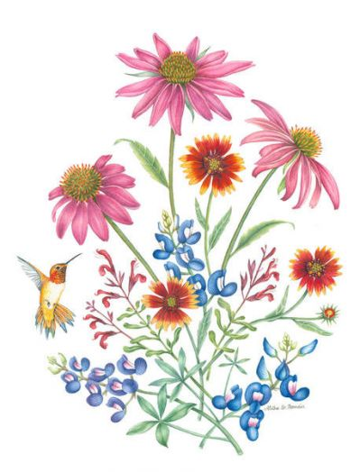 Aletha St. Romain Hummingbird with Bouquet of Coneflowers, Bluebonnets, Fire Wheels and Salvia
