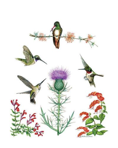 Aletha St. Romain 4 Native Texas Hummingbirds with Wildflowers